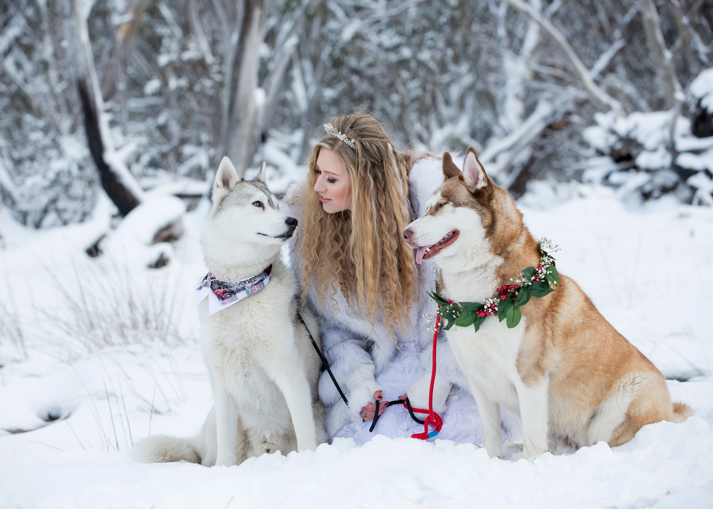 Bride with Husky Dogs in the Snow